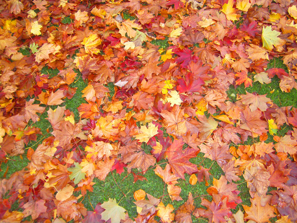 Collect the fallen leaves for making crafts.