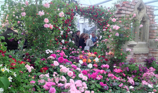 Rose display in the Pavilion