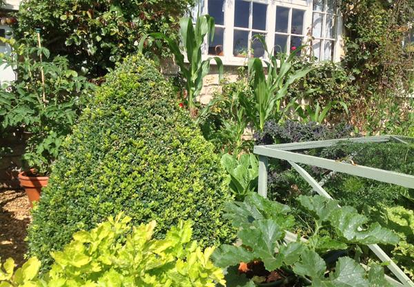 Organic vegetables from the kitchen garden.
