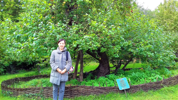 The apple tree where Newton discovered garvity.