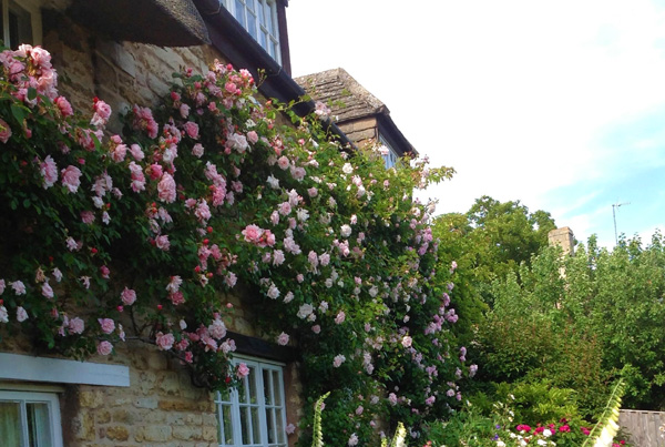 See rose covered cottages