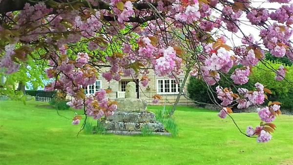 Blossom in Skillington