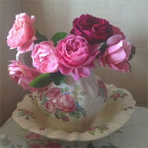 beautiful-fragrant-david-austin-roses-from-the-garden