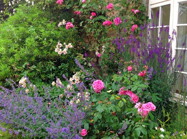 Homestay garden.