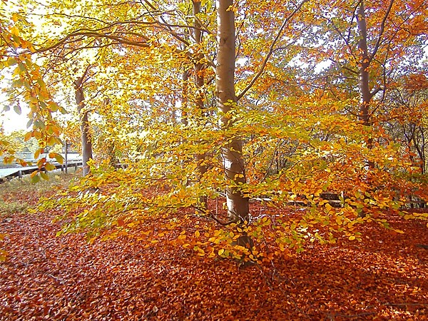 Enjoy beautiful autumn colours